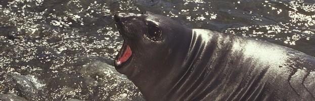 Seals in Culture