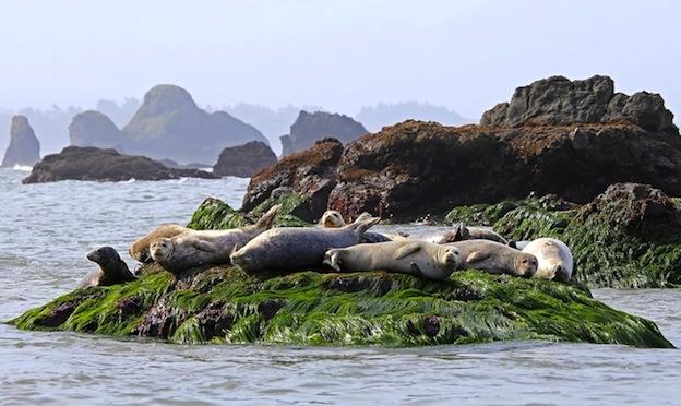 ¿Dónde viven las focas?